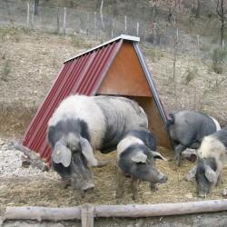 Abri en tôle pour moutons, porcs, chèvres